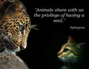 119953-thoughtfull-quotes-animals